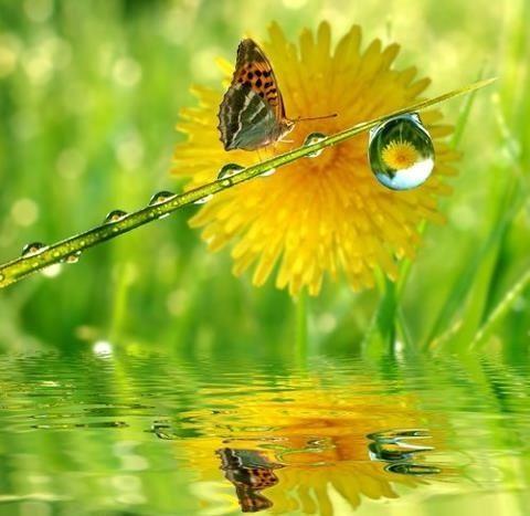 La mariposa y la gota de agua  Gotas de agua  Pinterest  Gotas