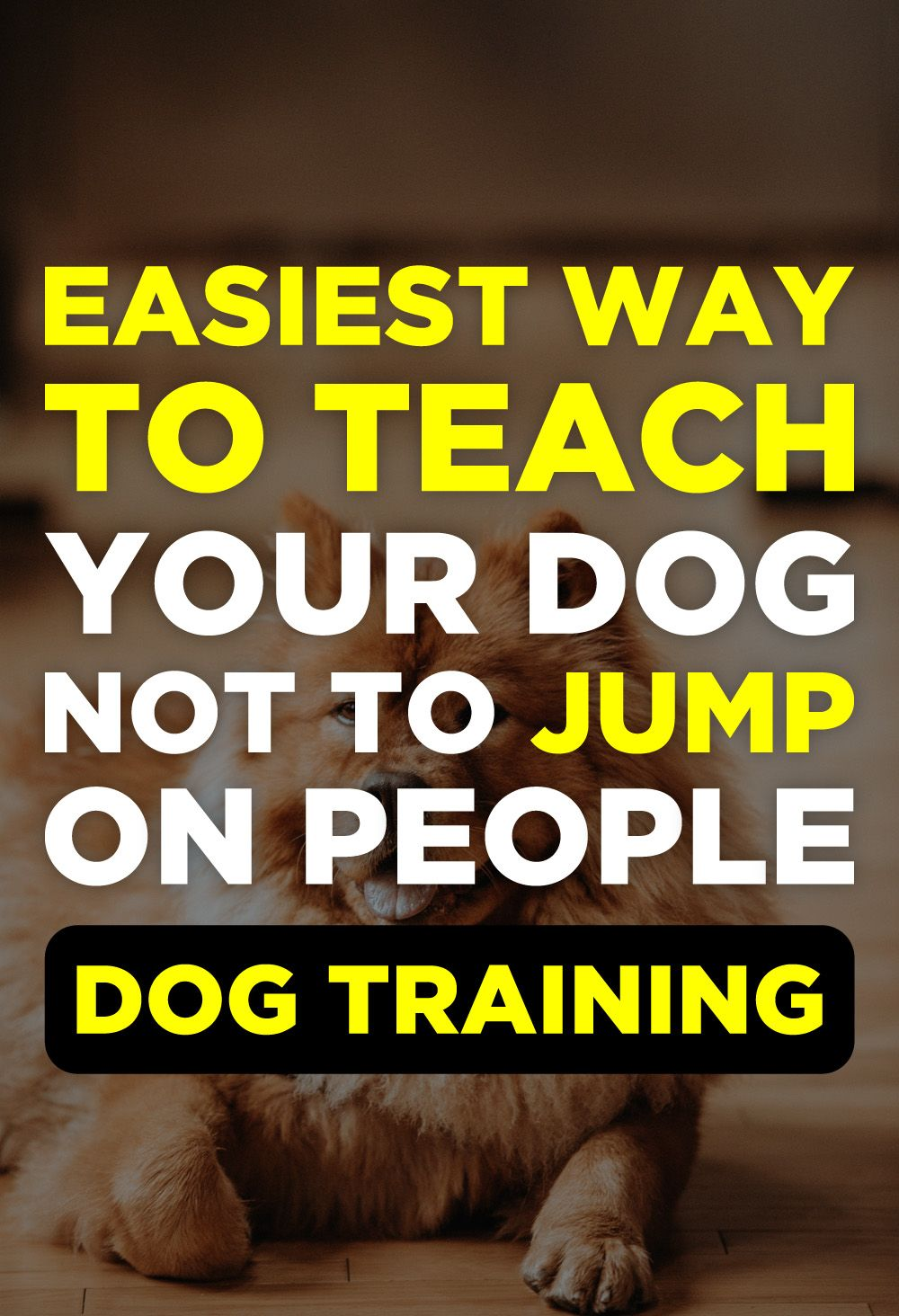Brain Training For Dogs Review Dog Training Treats Puppy