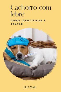 CACHORRO COM FEBRE: como identificar e tratar?  NUNCA deixe que seu cachorro esteja com mais de 39º de febre, é extremamente perigoso, por isso, se acontecer, leve-o imediatamente ao veterinário. Se não for esse o caso, veja alguas medidas que você pode tomar para reduzir a febre do seu animal.