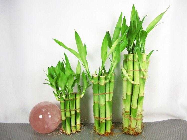 Plantas de exterior para terrazas y balcones 38 ideas pinterest plantas de exterior - Bambu planta exterior ...