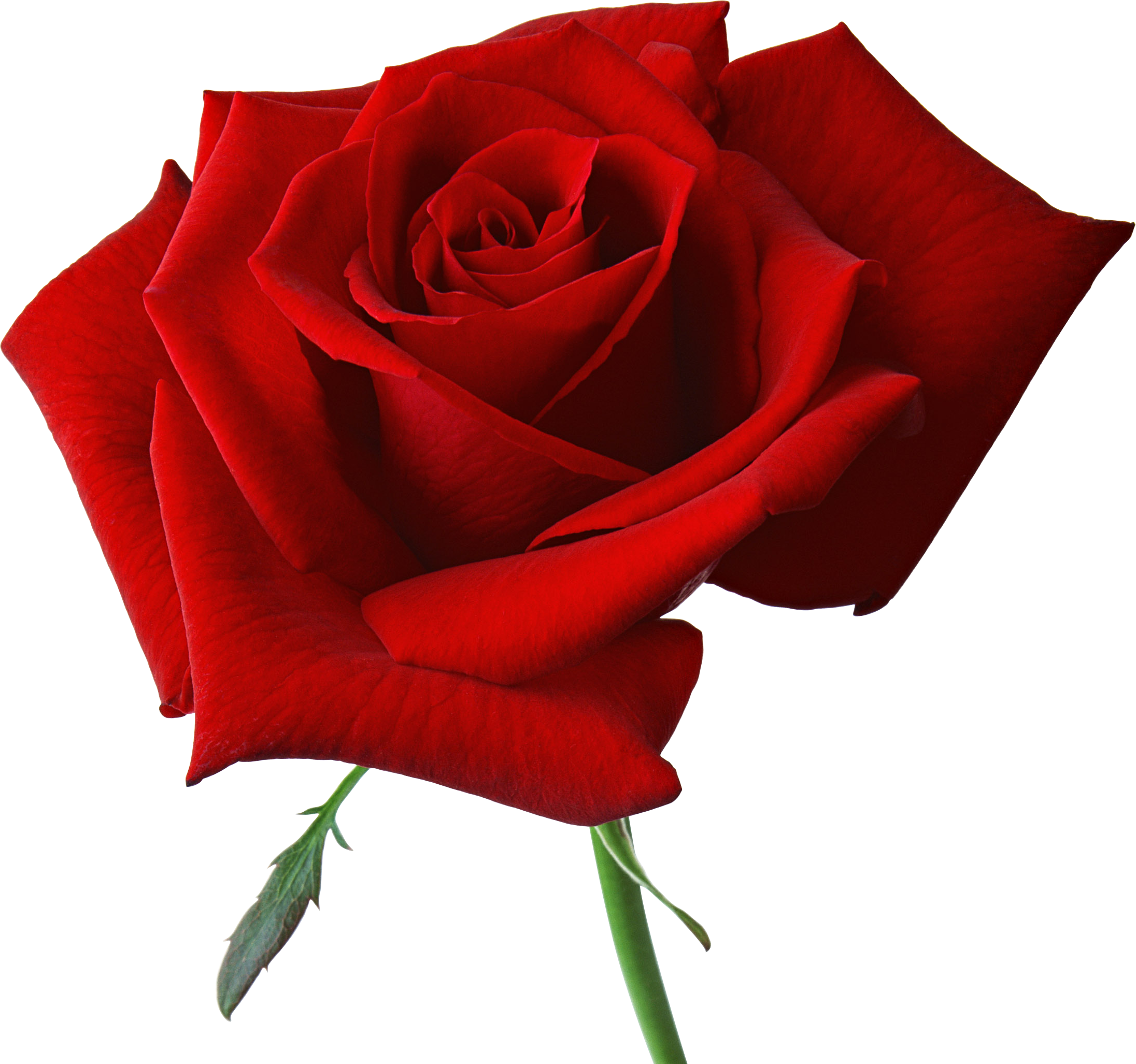 Pin De Kianas Dimitrios En Png Rosas Rojas Hermosas Tipos De Flores Rosas