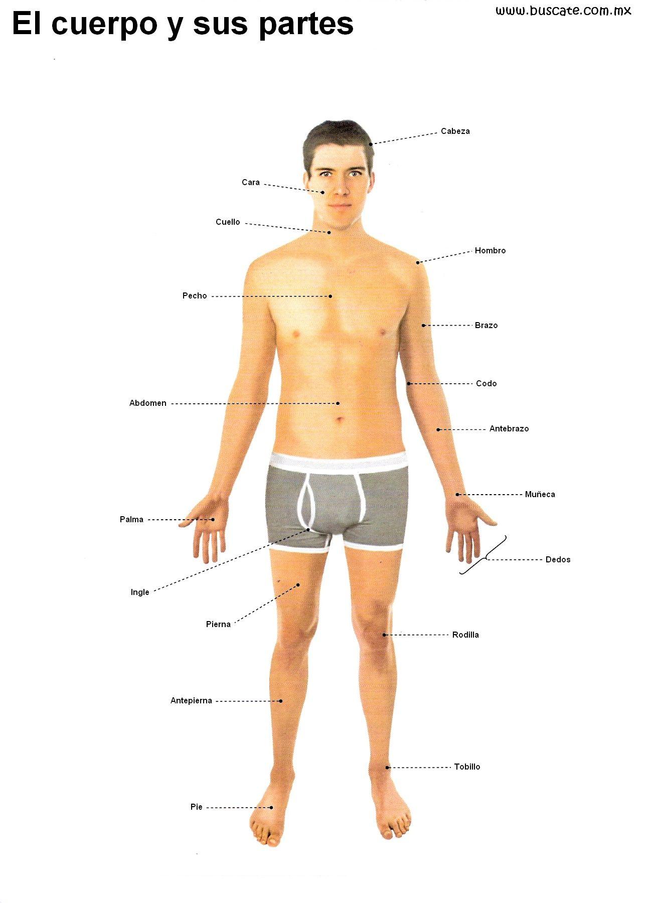 Esquema del cuerpo humano en colores. Con el nombre de sus partes ...