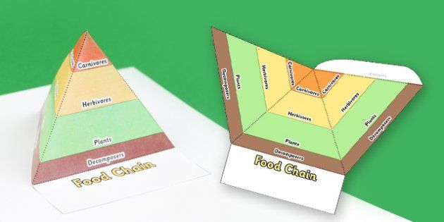 Food Chain Pyramids Foldable Visual Aid Template  Food Chain