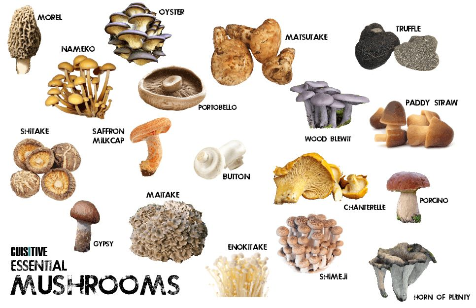 the different kinds of mushrooms and their medical advantages and disadvantages The advantages and disadvantages of the different types of business entities by jim woodruff updated june 28, 2018.