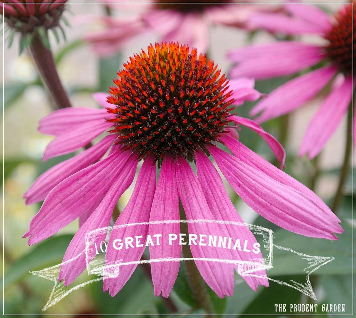 10 Great Perennials Every Flower Garden Needs Perennials Flower
