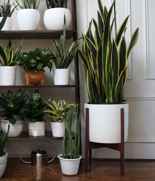 Case Study Ceramics Large Cylinder With Stand Plantas Decoracao Com Plantas Plantas Para Quarto