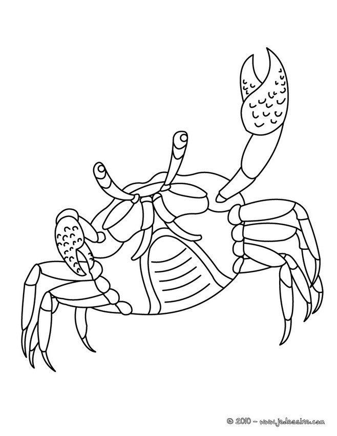 Coloriage Realiste D Un Crabe A Imprimer Gratuitement Ou Colorier
