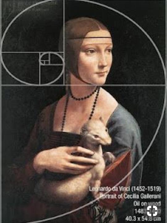 Pin Di Kate Su Evolution Leonardo Da Vinci Sezione Aurea Immagini