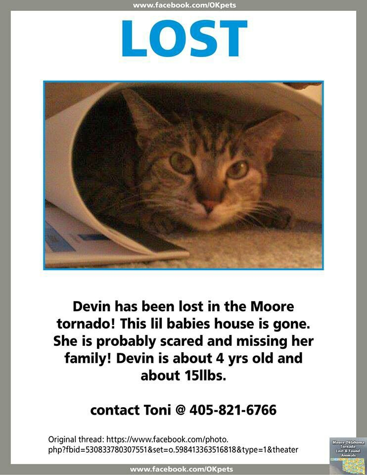 Moore Oklahoma Lost Please Share Losing A Pet Find Pets Animal Companions