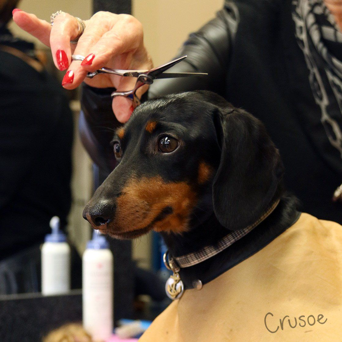 Mydoglikes Mydoglikes Twitter Crusoe The Celebrity