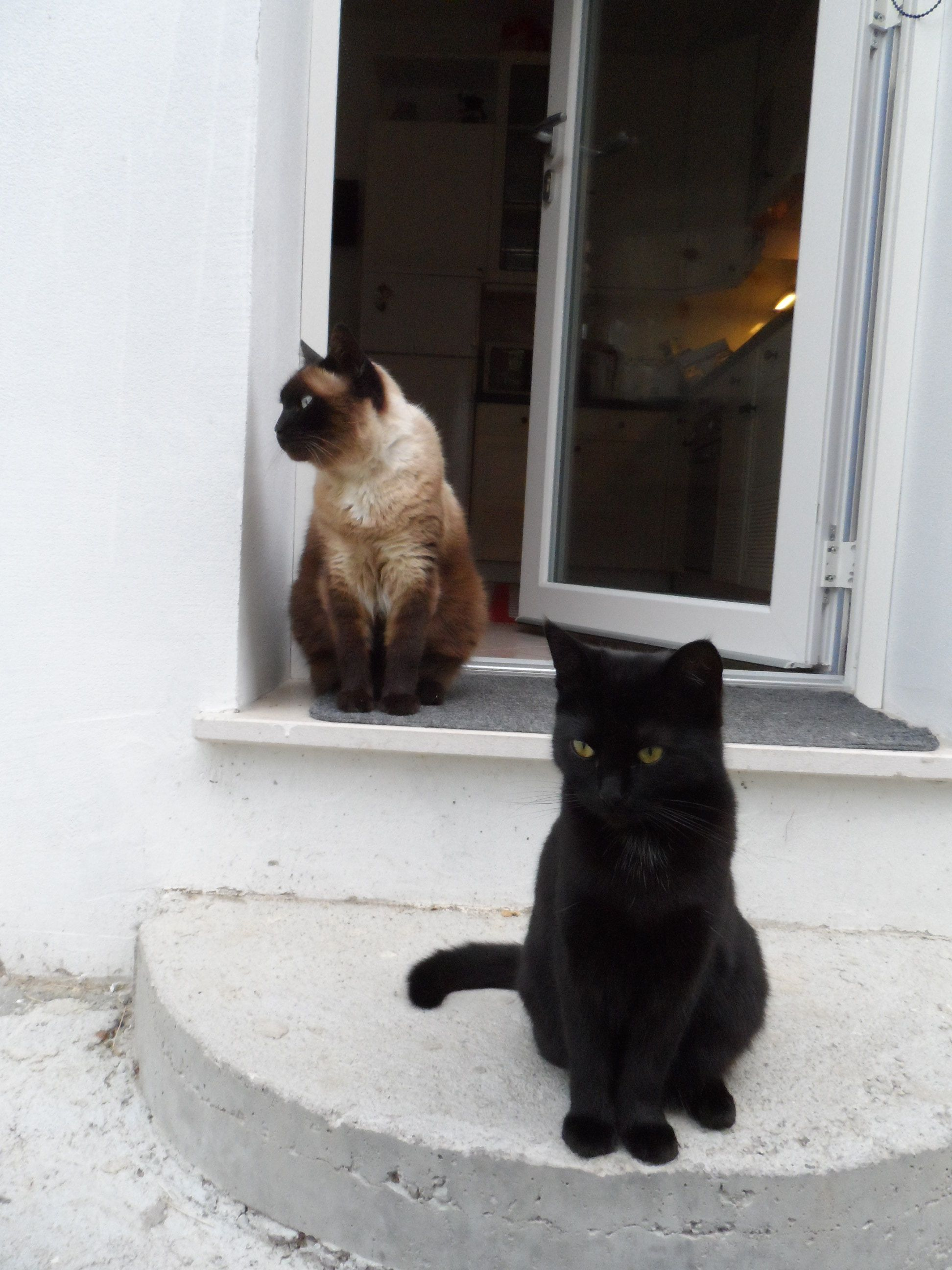 Pippo e Zoe aspettano di mangiare