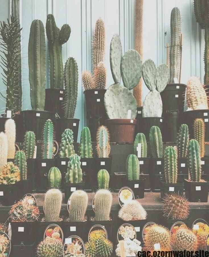 cactus plants outdoor Ideas  Succulents and also cactus are definitely the ideal property decor pertaining to minimalists and movement set