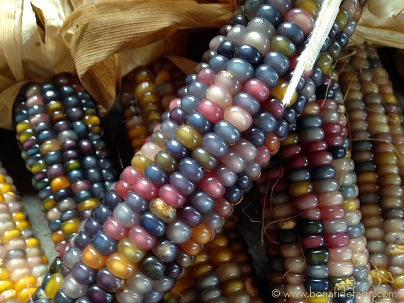 Glass Gem Is A Color Lover S Dream Description From Bonafidefarm