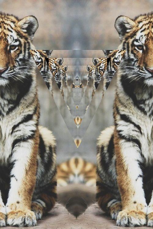 My Loves V Animals Wild Animal Planet Animals