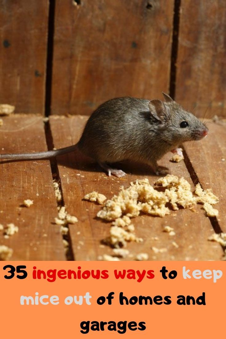 35 tested ways to keep mice out of your camper, garage