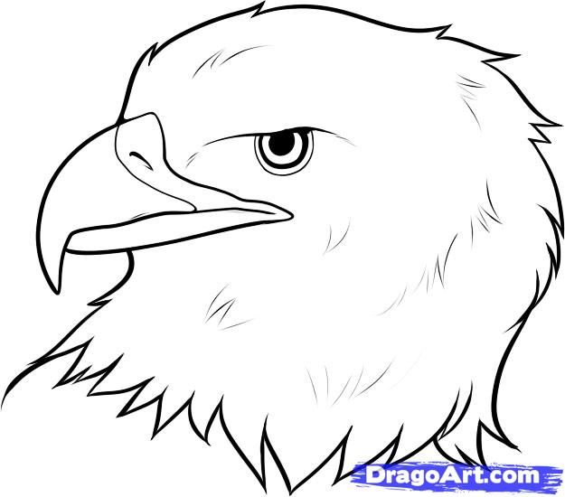 How to draw an eagle head step 7