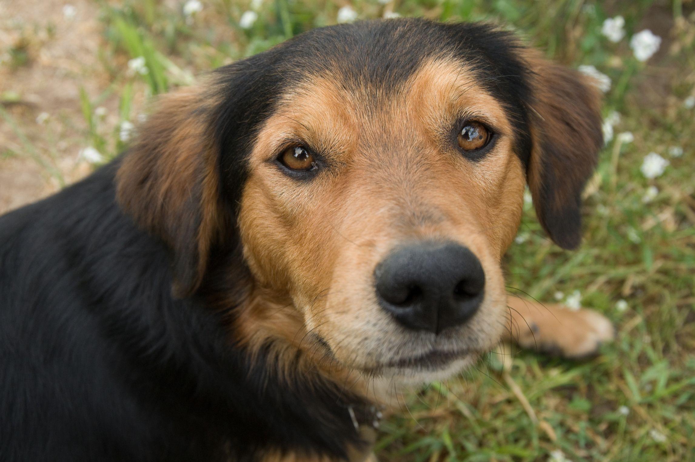 The First Days With Your Senior Dog Petfinder Senior Dog Old Dogs Dog Transport