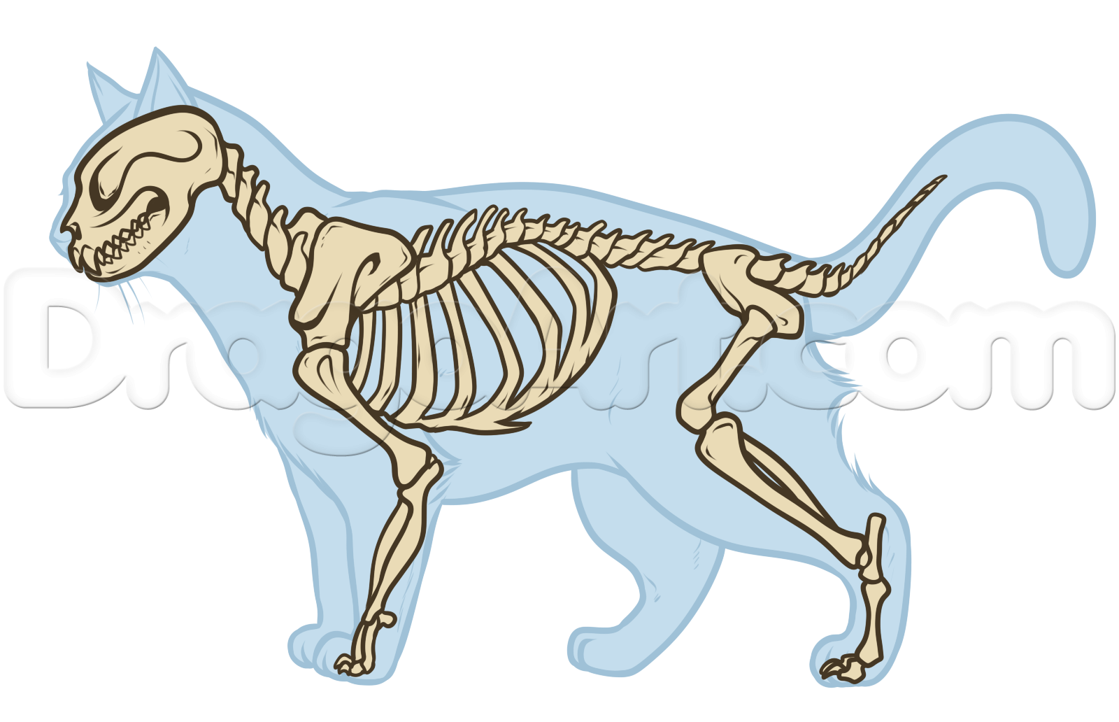 Cat Anatomy Drawing, Step by Step, Pets, Animals, FREE Online ...