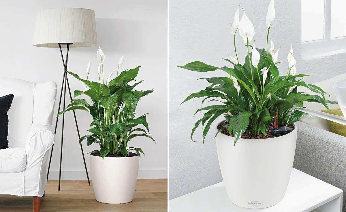 Pflanzen Schlafzimmer Best Of Pflanzen Fürs Schlafzimmer Feng Shui