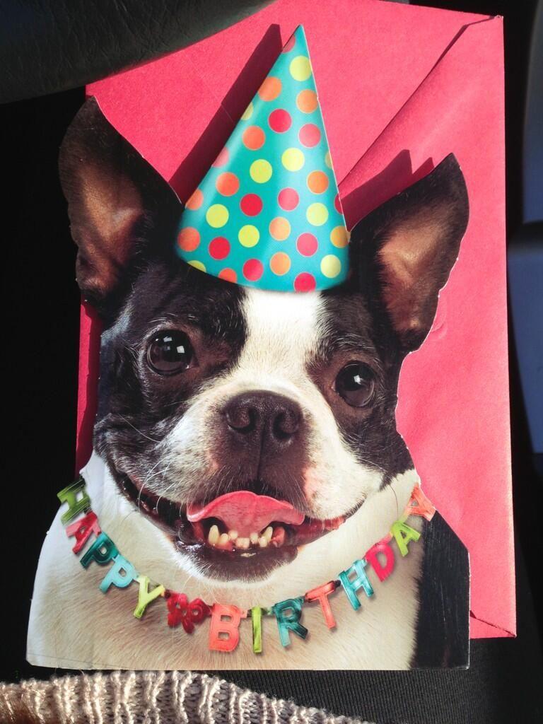 Happy Bday Momma Happy Birthday Dog Boston Terrier Boston Terrier Love