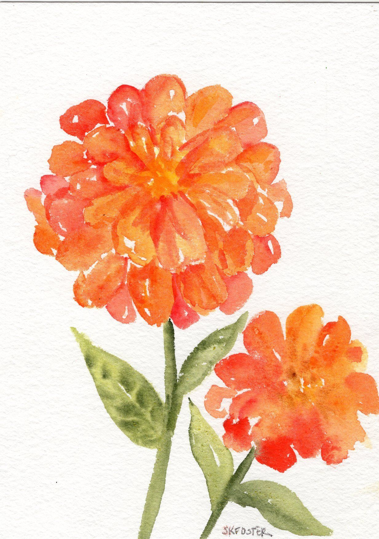 Zinnia Watercolor Painting Original Small Flower Art 5 X 7 In
