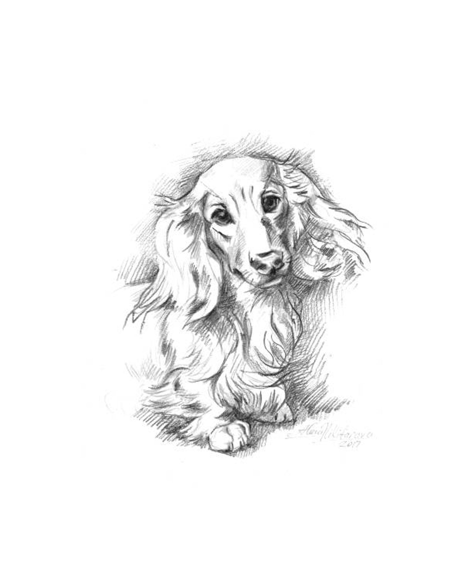 Dog Portrait Long Haired Dachshund Doxie 8w Instant Etsy Dachshund Drawing Dog Portraits Long Haired Dachshund