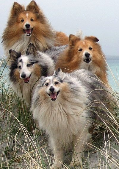 Dogs do smile for the camera. Photo Brian Kings