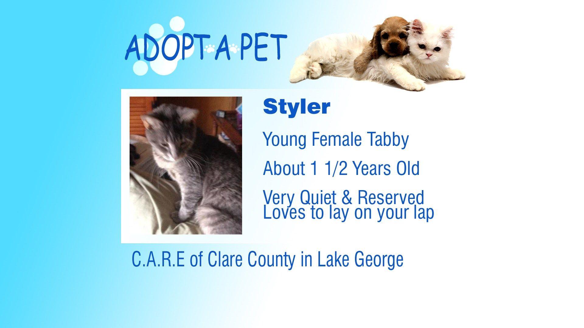Adopt A Pet Tuesday Cami, Robin, Styler Northern