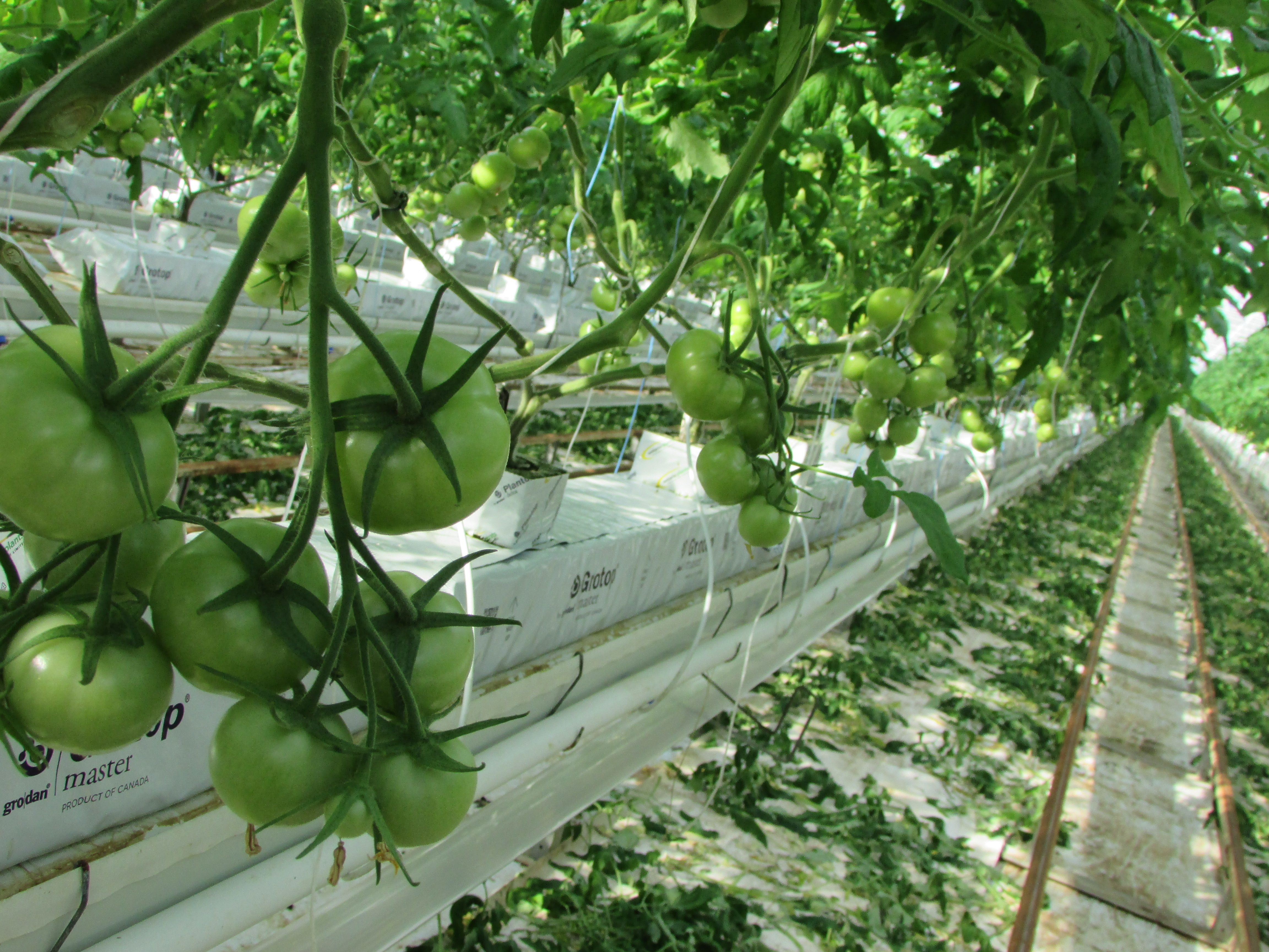 19 Best Our Greenhouses - Albion images in 2017 | Aquaponics