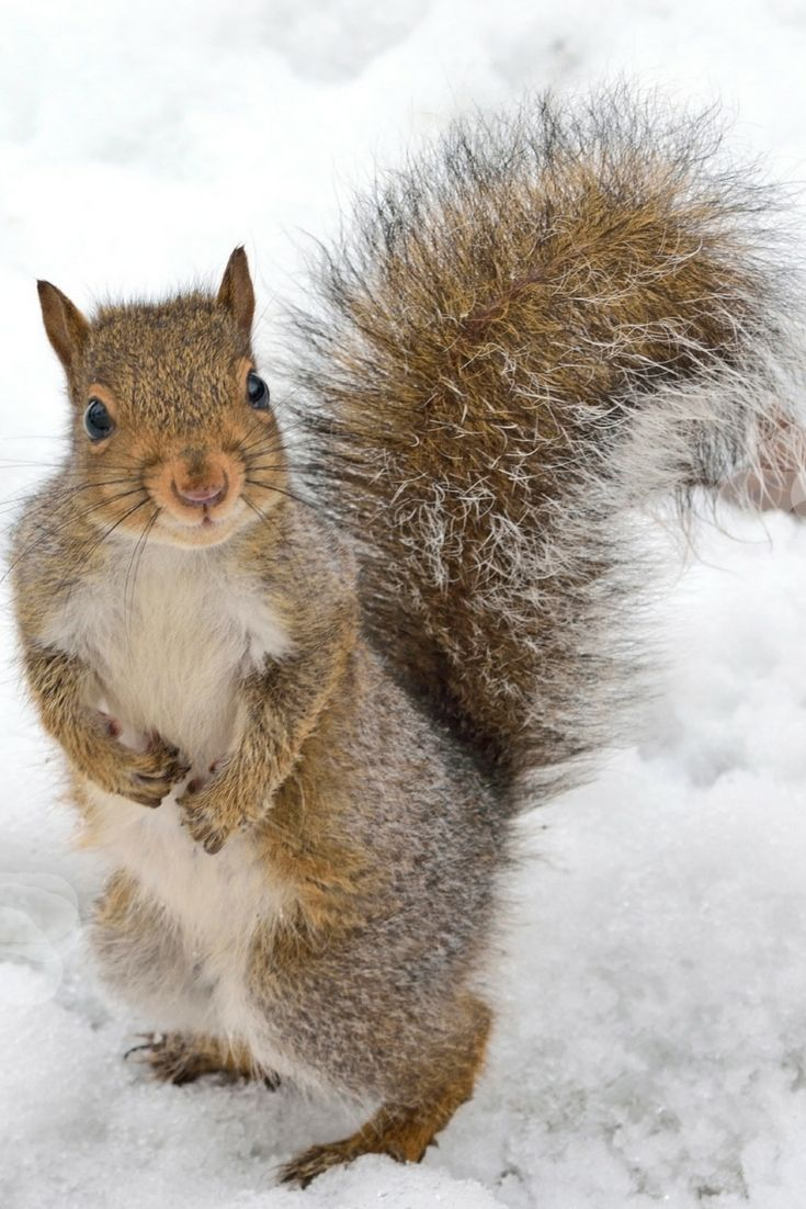 How To Get Rid Of Squirrels In The Attic Get Rid Of Squirrels Squirrel Getting Rid Of Rats