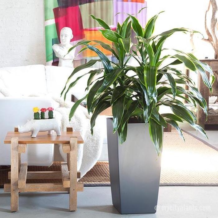 fr dunkle ecken perfect deejaavoode ihr onlineshop fr und with pflanzen fr dunkle ecken in der. Black Bedroom Furniture Sets. Home Design Ideas