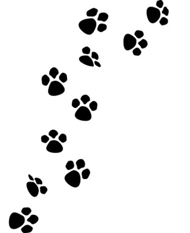 Puppy Paw Drawing : puppy, drawing, Prints, Extremely, Draw., Puppy, Prints,, Print,, Print, Drawing