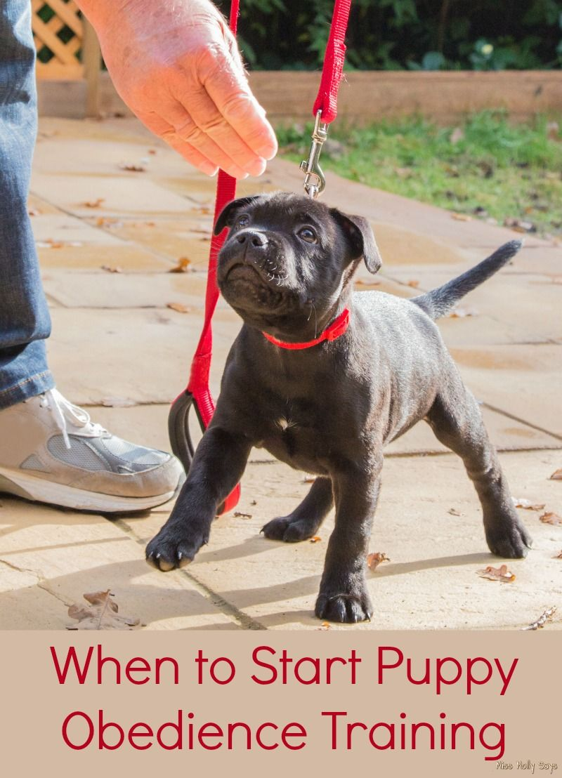 When to Start Puppy Obedience Training Miss Molly Says
