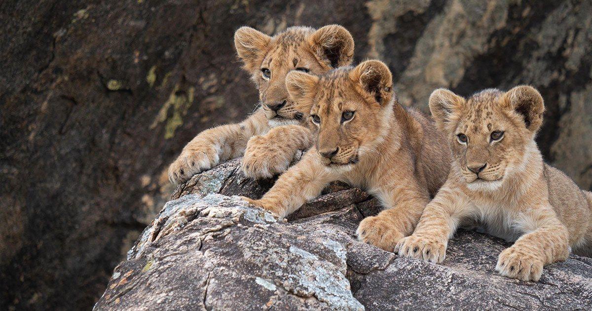 African Safaris & Indian Journeys Signature travel
