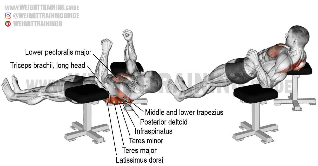 Elbow Lift Exercise Instructions And Video Weight Training Guide Exercise Weight Training Good Back Workouts