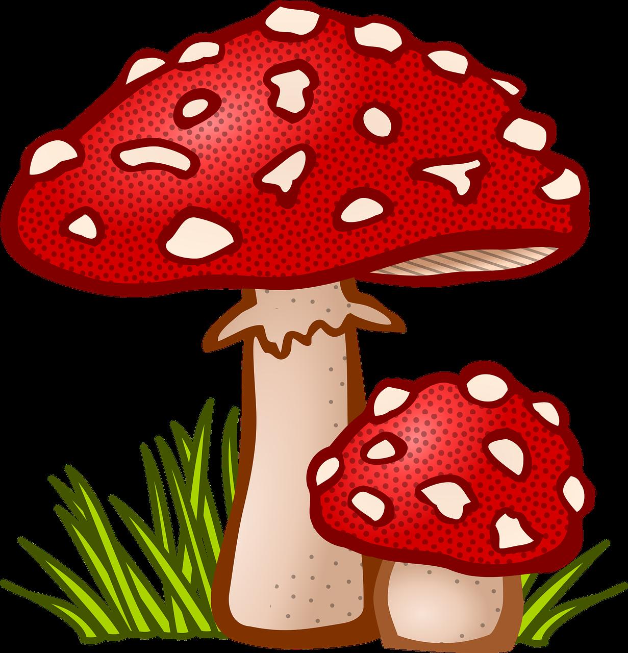 Gratis Obraz Na Pixabay Grzybicze Grzyb Roslin Muchomor Free Clip Art Stuffed Mushrooms Mushroom Art