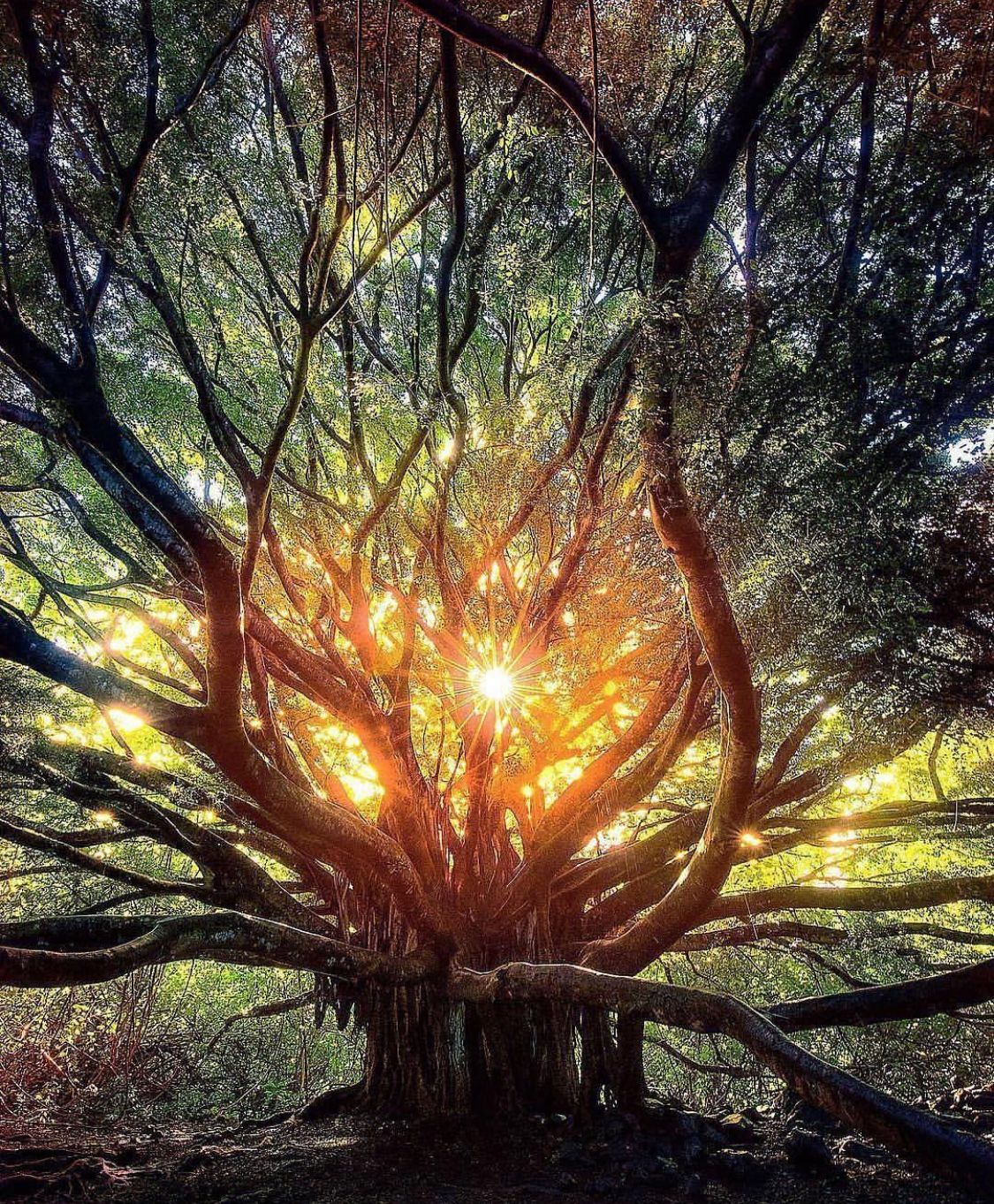 Lovely Very Different But Lovely Thank You For Sharing Beautiful Tree Nature Tree Beautiful Nature