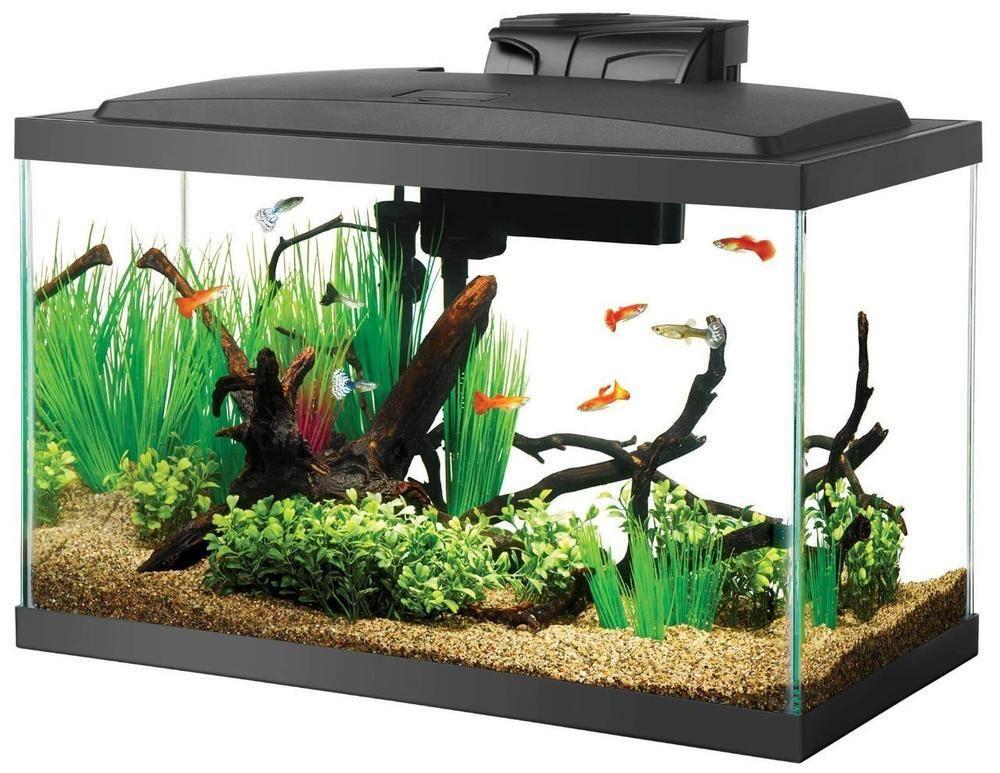 Fish Tank Ideas Fish Tank For Sales Fishtank Fishtanks 10 Gallon Fish Tank Aquarium Fish Tank Cool Fish Tanks