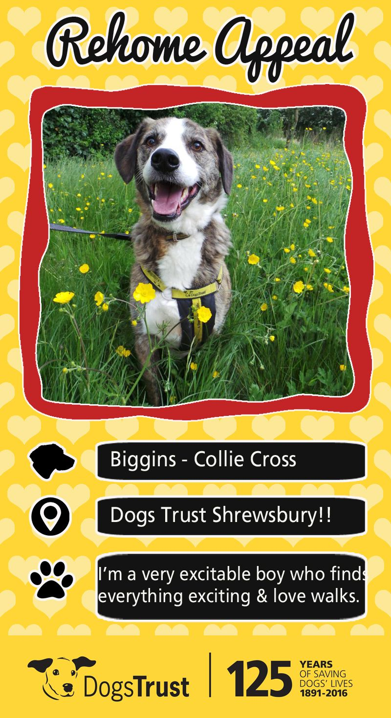 Biggins Is A Very Excitable Boy Who Finds Everything Exciting And
