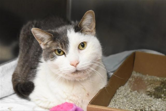 klein 21387 manhattan to be destroyed 02 27 18 klein needs follow up vet care and needs a rescue angel tonight poor klein has got cat dail