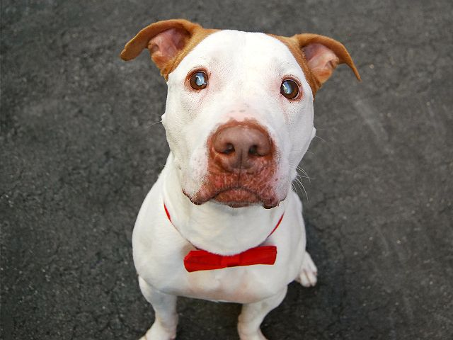 Jinx A1078595 Dog Adoption Support Animal Pet Adoption