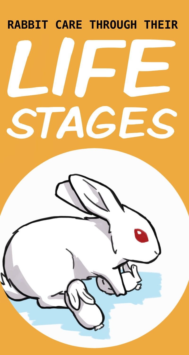 How To Care For Your Rabbit Through All Their Life Stages In 2020 Rabbit Care Rabbit Facts Life Stages
