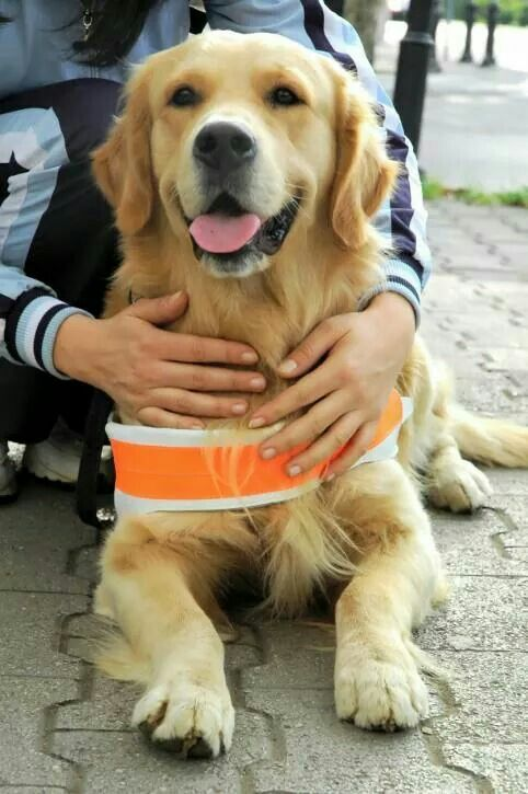 It Is Int L Assistance Dog Week Which Recognizes Assistance Dogs