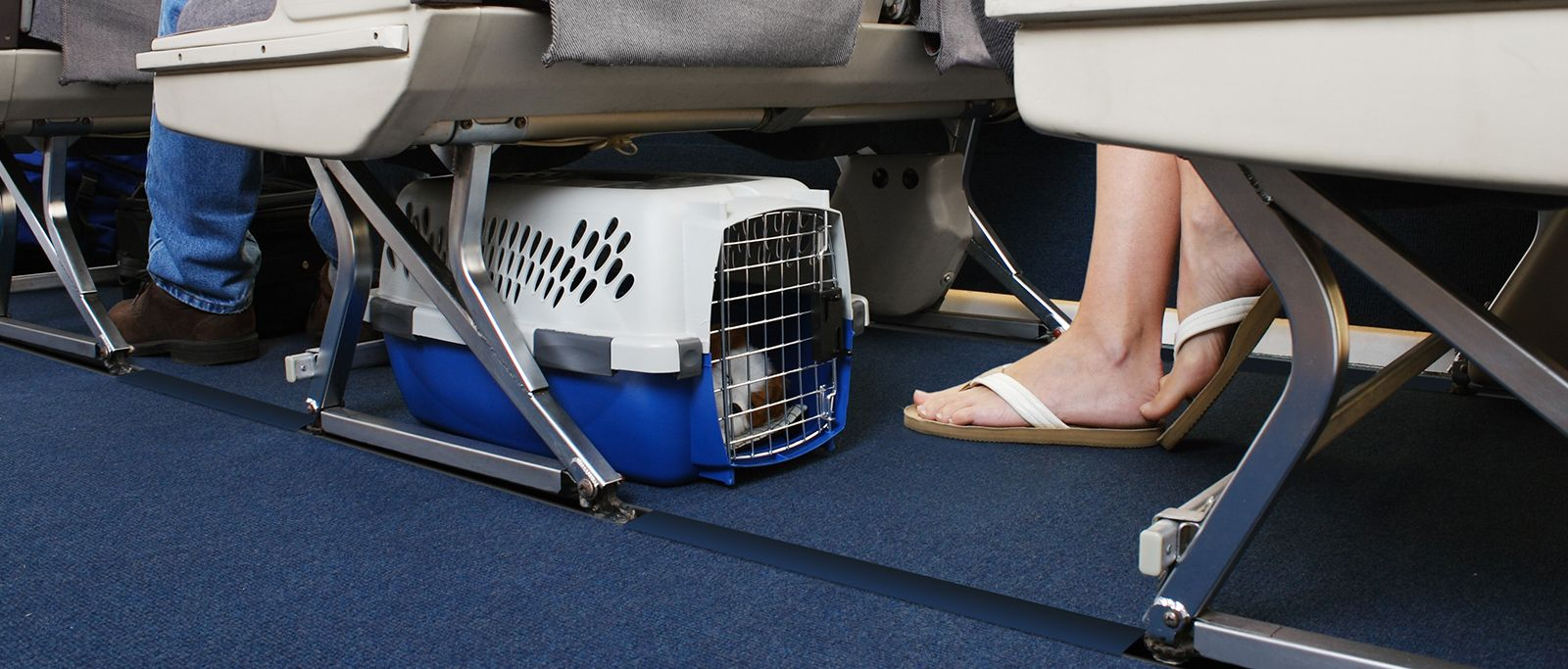 Here are Important Tips to Fly with Pets in the Airlines