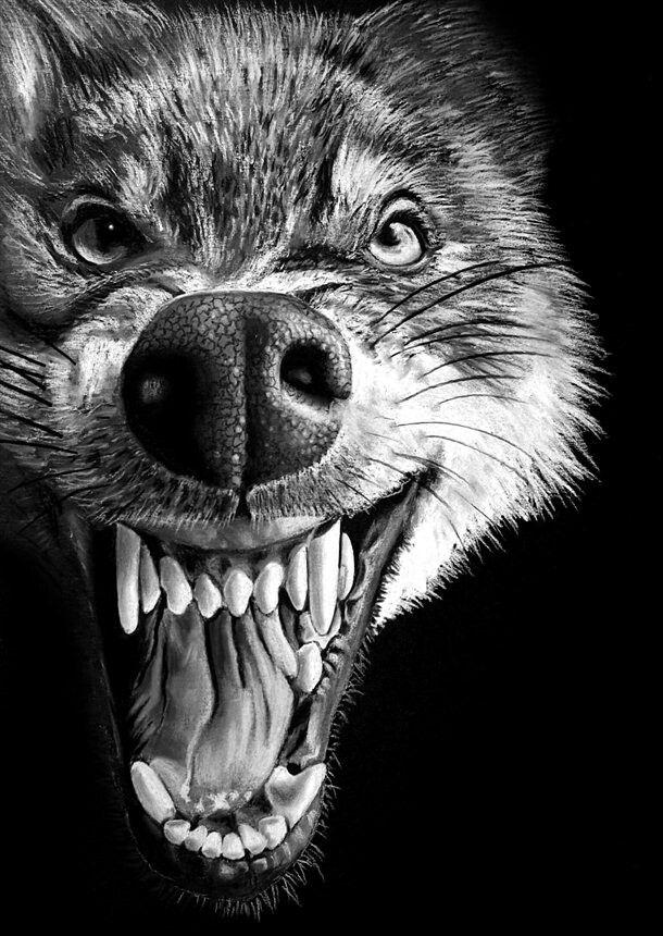 Оскал волка и медведя картинки форма