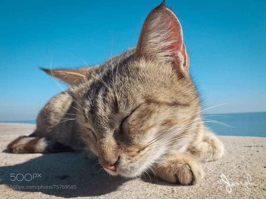 Sleepy cat by Joseph_Shbair