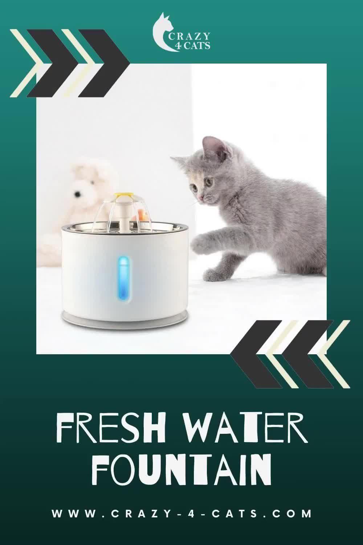 Fresh Water Fountain Video In 2020 Cat Water Fountain Kitten Care Kitten Proofing