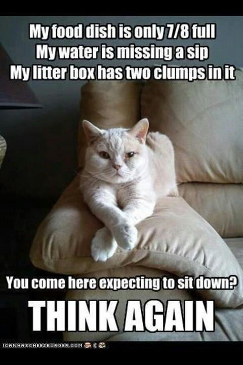 So cute! Gotta love a kitty with an attitude :)