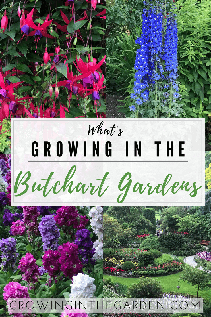 What's Growing in the Butchart Gardens | Growing In The Garden