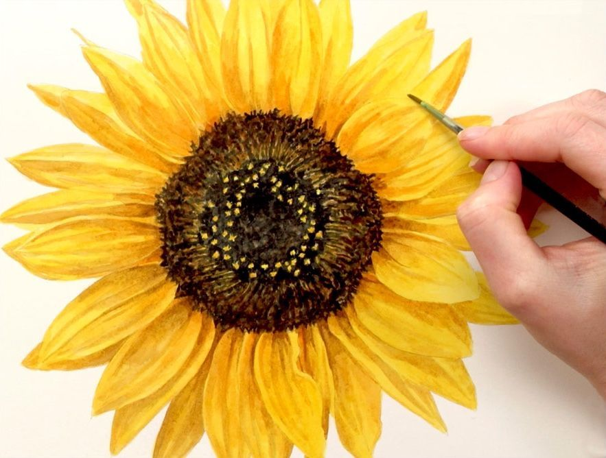 How to paint a realistic sunflower in watercolour – Anna Mason Art